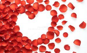 00872 300x185 - گلبرگ های قرمز زیبا