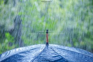 00205 300x200 - چتر مشکی / سیاه و باران