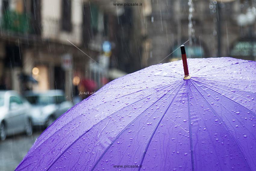 00226 - چتر بنفش زیبا و باران