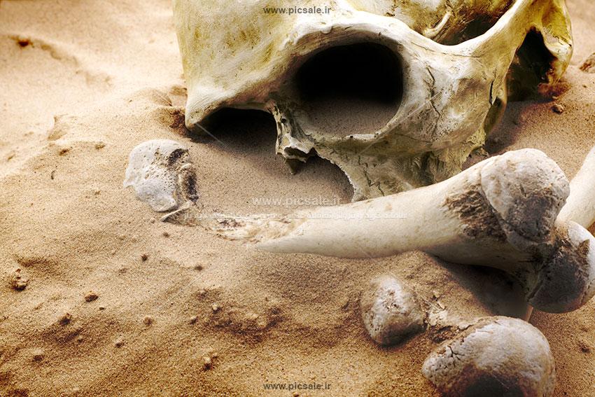 00409 - جمجمه انسان و استخوان اسکلت