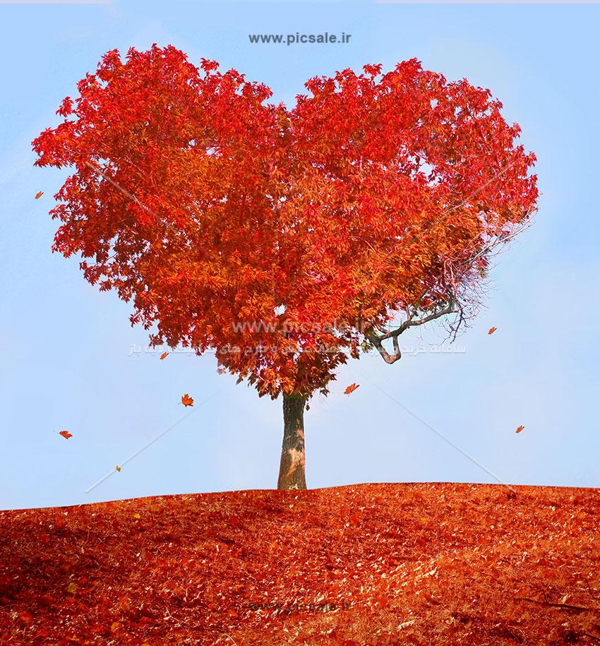 001002 - درخت پائیزی قلبی عاشقانه