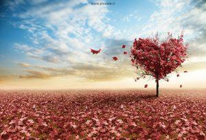 001007 300x205 - درخت پائیزی قلبی عاشقانه