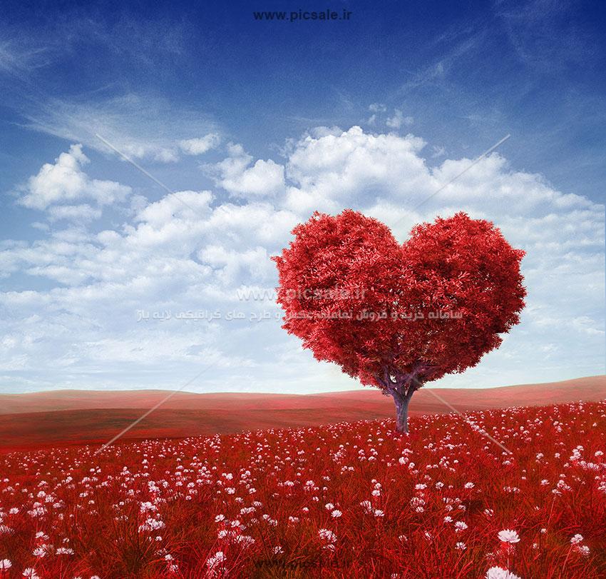 001051 - درخت پائیزی قلبی عاشقانه