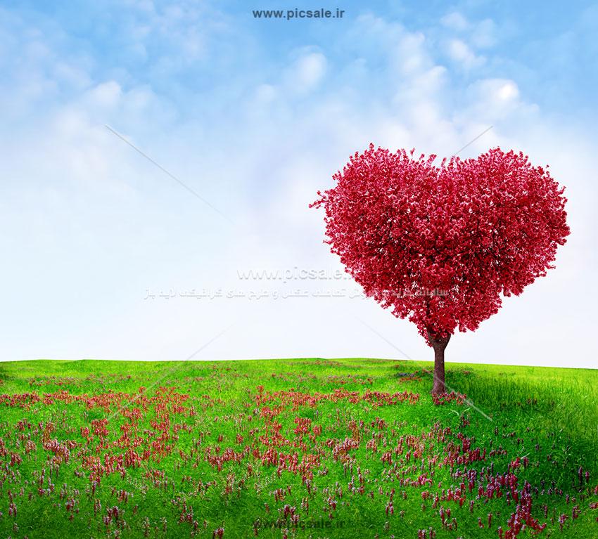 001067 - درخت بهاری قلبی عاشقانه