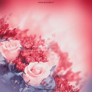00907 300x300 - زمینه ای از گلهای زیبا