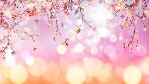 0821s 300x169 - شکوفه های بهاری