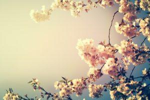 0825s 300x200 - شکوفه های بهاری زیبا