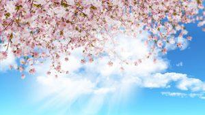 0827s 300x169 - شکوفه های بهاری زیبا