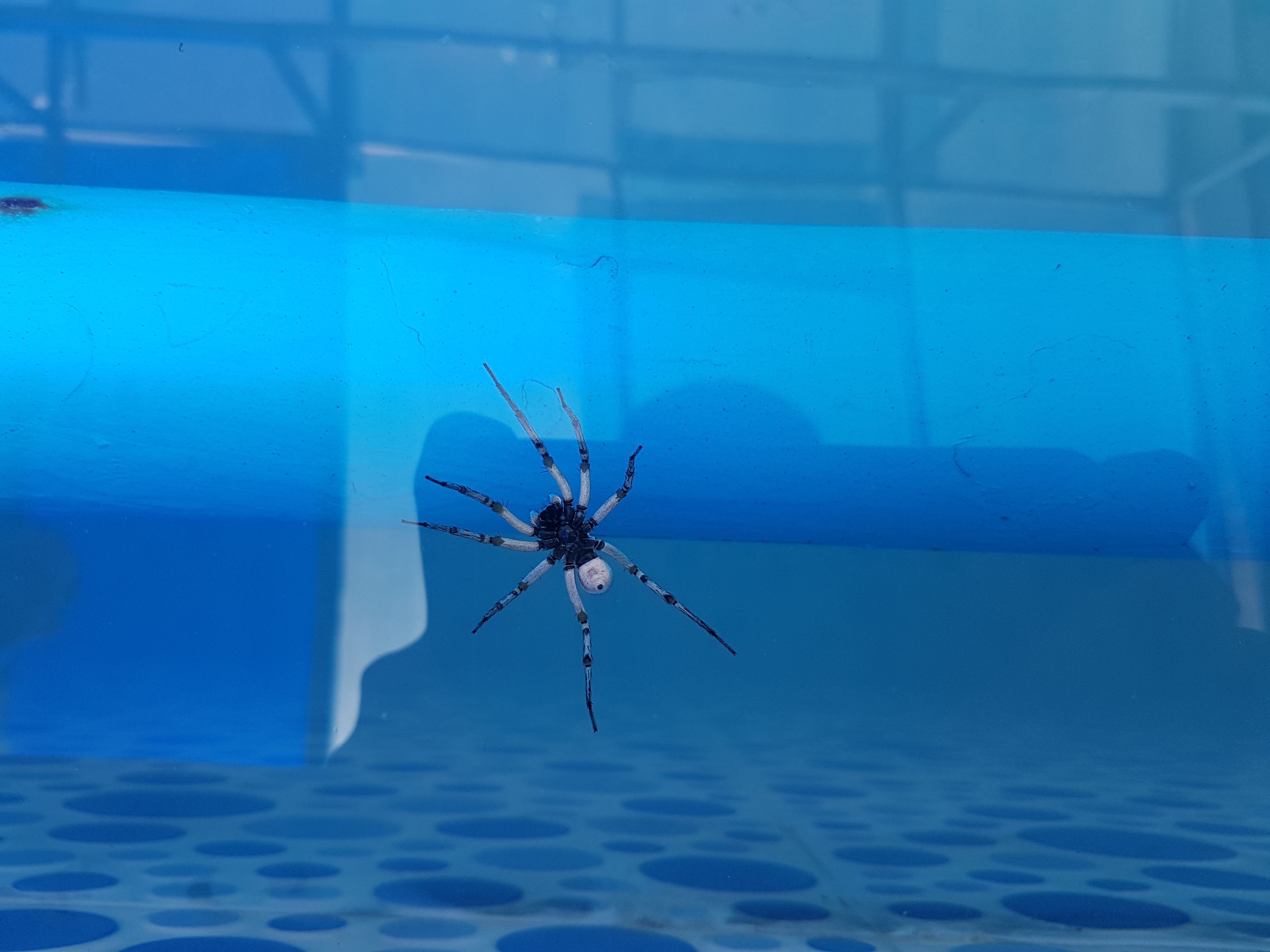 ۲۰۱۷۰۶۲۷ ۱۴۵۹۱۶ - عنکبوت به شکل ربات