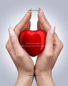 0010109 239x300 - قلب قرمز در دست عاشقانه