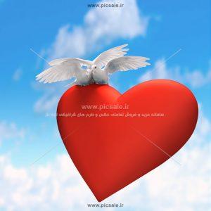 00909 300x300 - کبوترهای سفید روی قلب قرمز عاشقانه