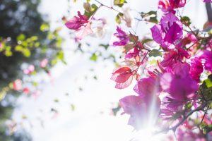 0822s 300x200 - گلهای بهاری زیبا